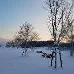 冬の芝生公園