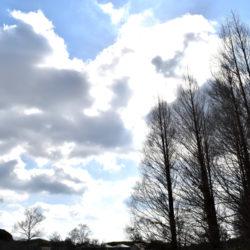 芝生公園から見上げた空